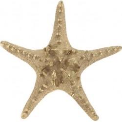 Αστερίας polyresin χρυσός 21,5χ20χ5 INART 4-70-117-0006